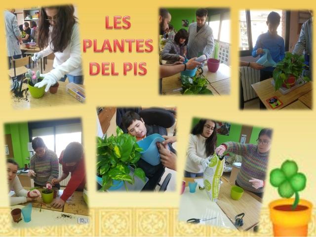 les-plantes-del-pis