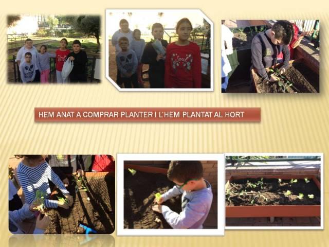 planter A3